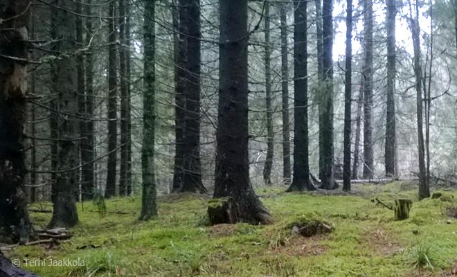 Meiko, metsä Kuva: Terhi Jaakkola