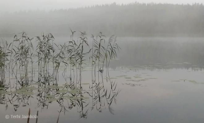 Aamu-uinnilla mökin omassa järvessä Kuva: Terhi Jaakkola