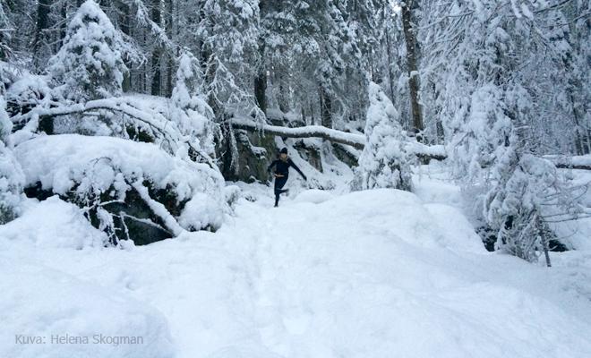 Talvipolkujuoksija 1 Kuva: Helena Skogman