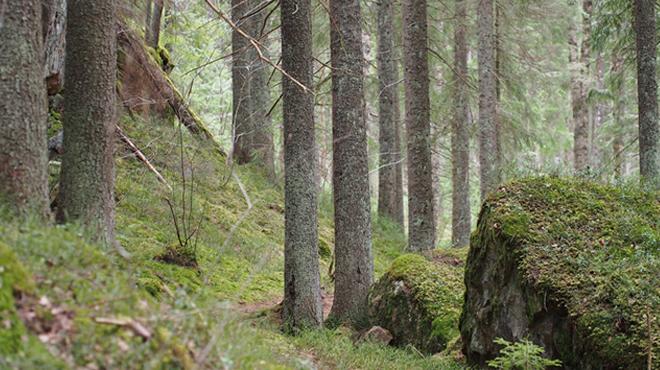 Metsässä Kuva: Terhi Jaakkola