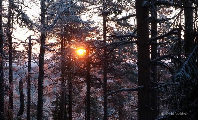 Auringonnousu Nilsiän Pisa-mäellä Kuva: Terhi Jaakkola